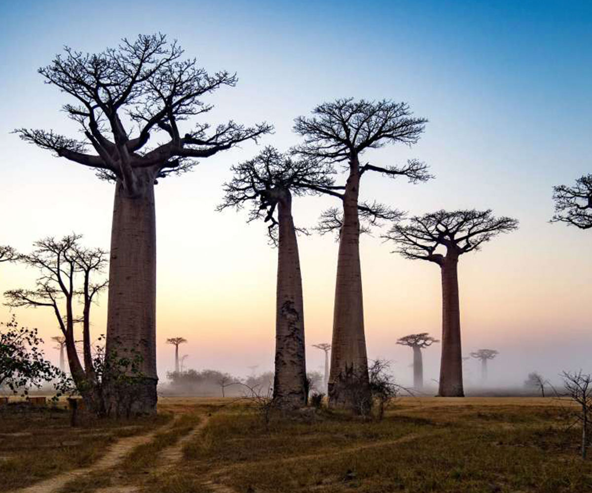 where is madagascar  facts about madagascar