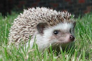 Top 10 Fascinating Pets Familyeducation