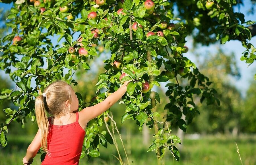 Apple Picking Coloring Pages : Family fun apple picking