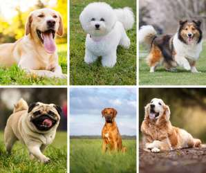 collage of the best dog breeds for kids