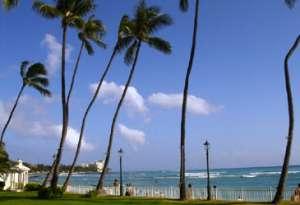 Exotic,Hawaii