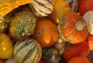 GourdsPumpkins