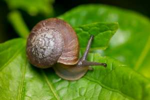Snail Farm Activity for Kids