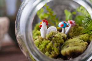 Terrarium Activity for Kids