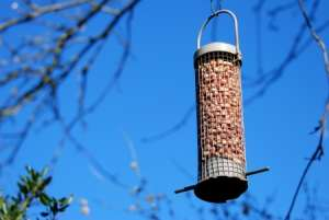 Tree Feeder Nature Activity for Kids