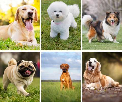What Kind Of Dog Should We Get The Best Dogs For Kids Familyeducation