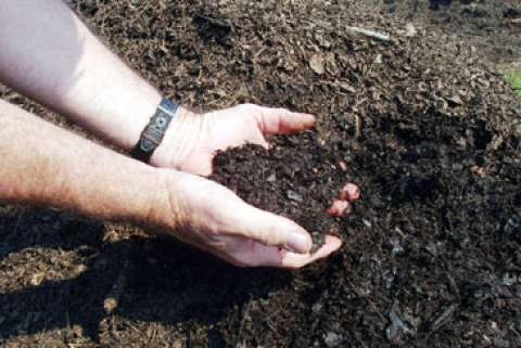 Landscaping with a Green Thumb: Composting