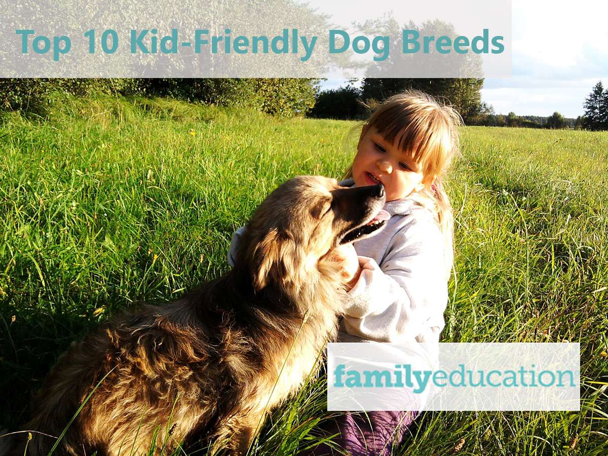 The Top 10 Kid-Friendly Dog Breeds