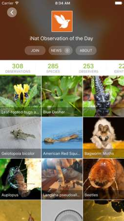 iNaturalists lets kids become an environmental citizen