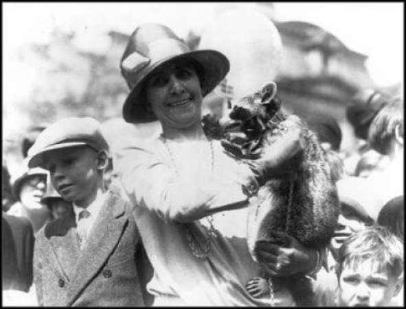 PresidentialPets,GraceCoolidge,raccoon,Rebecca