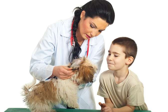 Tips for Learning Outside of School, Boy shadowing veterinarian for learning experience out of school