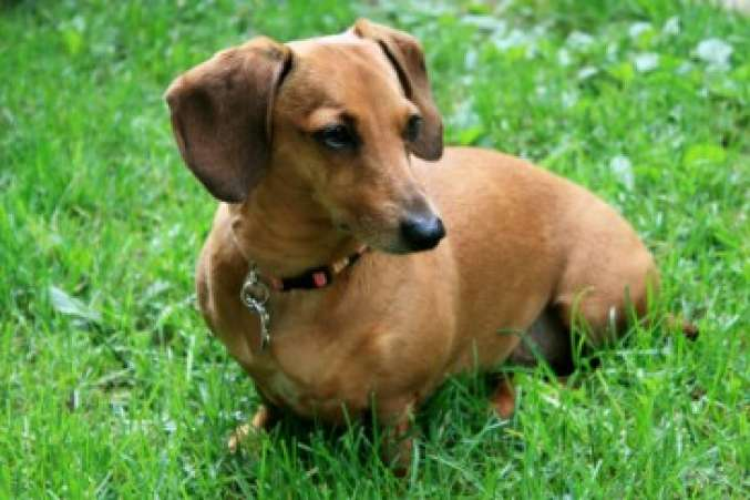 Breeds Of Dogs That Are Kid Friendly