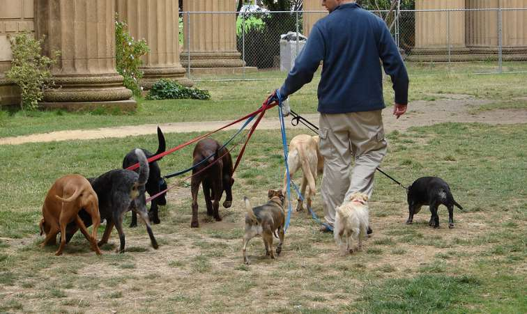 Start a Dog Walking Business
