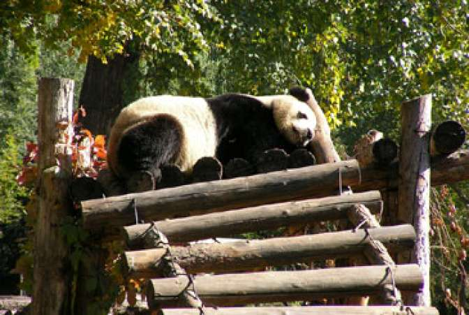 For the Kids: Beijing Zoo