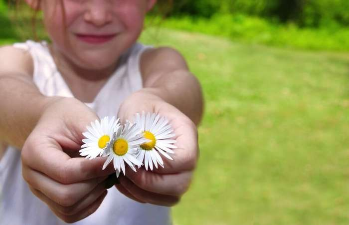Little girl holding bunch of daisies