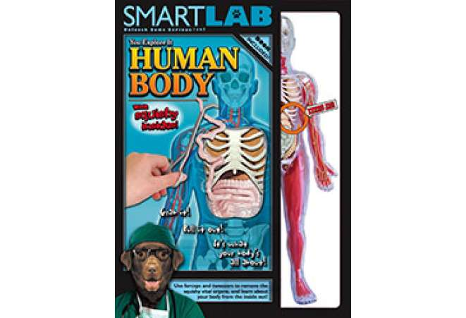 human body model toy for kids