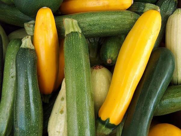 Close up of summer squash and zucchini