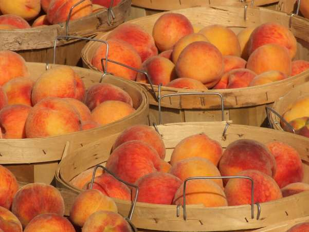 bushels of peaches, fruits