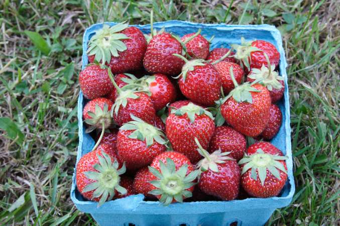 fresh strawberries, fruits