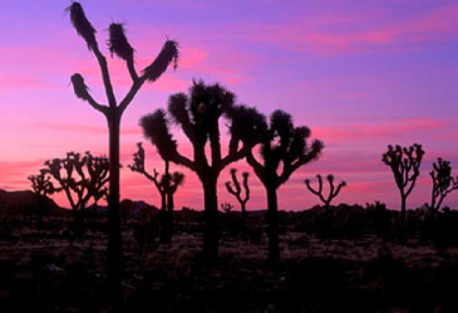 California,JoshuaTree