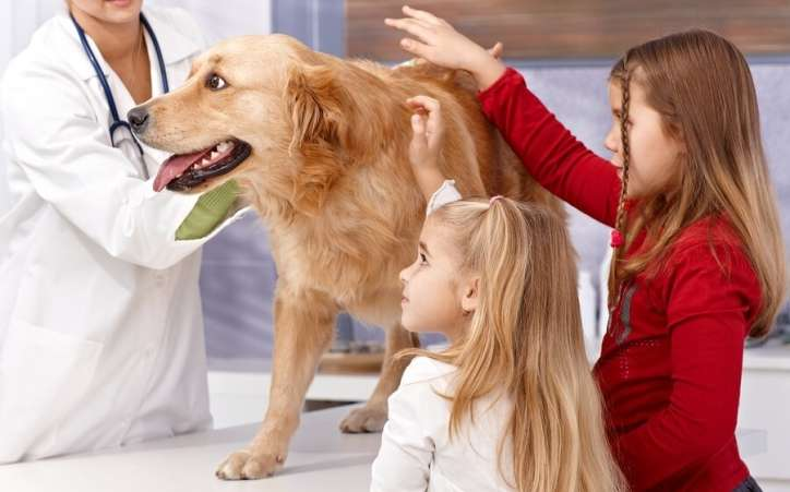 children with veterinarian
