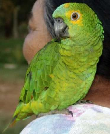 marthawashingtonparrot