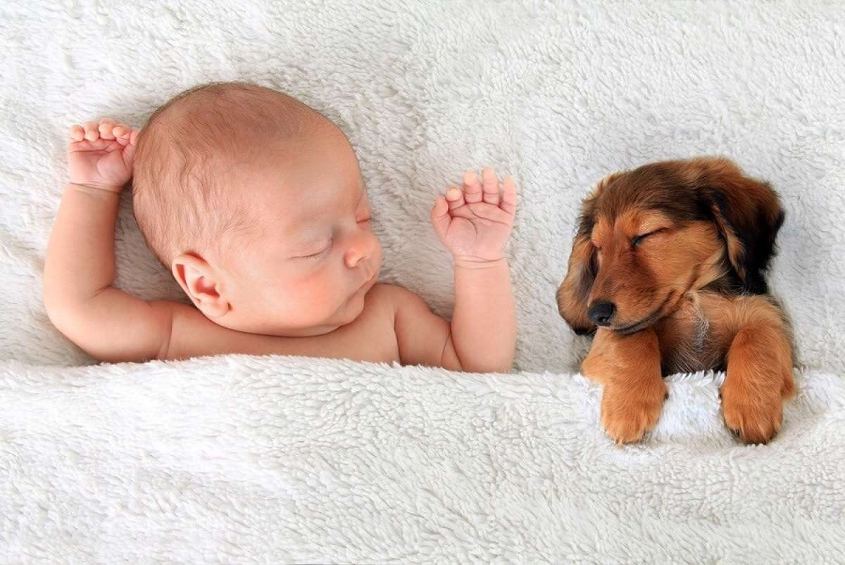 Puppy and baby Sleeping in Bed