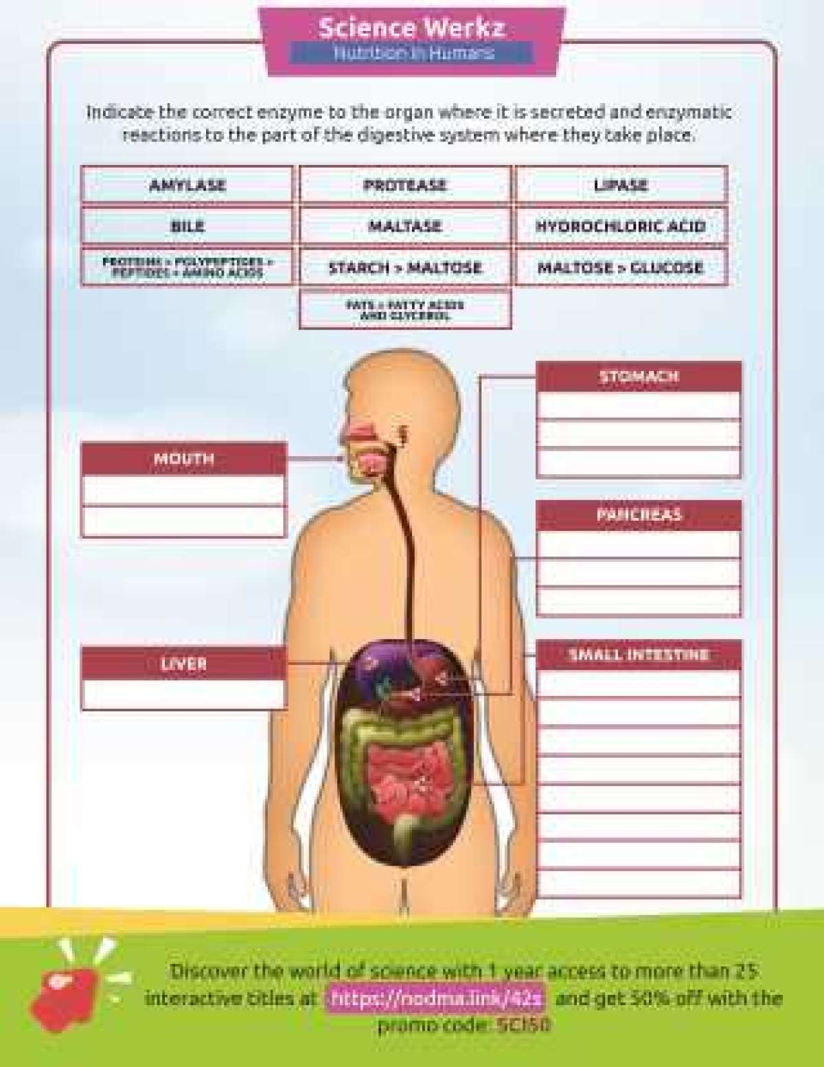 The Human Body Printables Familyeducation