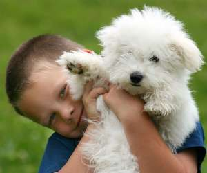 Best Dogs for Kids, Young boy with Bichon Frise puppy