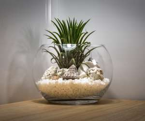 Grow a terrarium in a fish bowl or aquarium