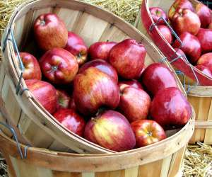 bushels of apples, fruits